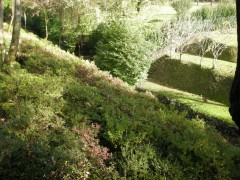 Giardino privato, scarpata paesaggistica in sottobosco