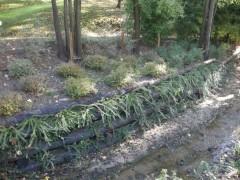 Scarpata paesaggistica con lavori di ingegneria forestale